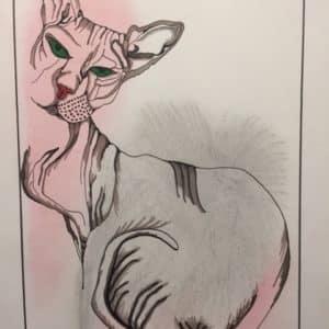 portrait le chat Sphynx- Patrice Vannicatte